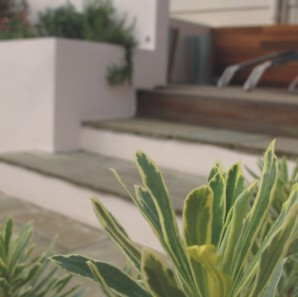 White rendered walls and Euphorbia in this modern garden