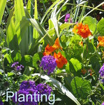 Soft Landscaping and plant design